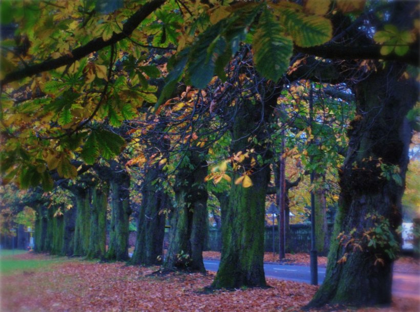Tree lined avenue at SEFTON PARK MEADOWS