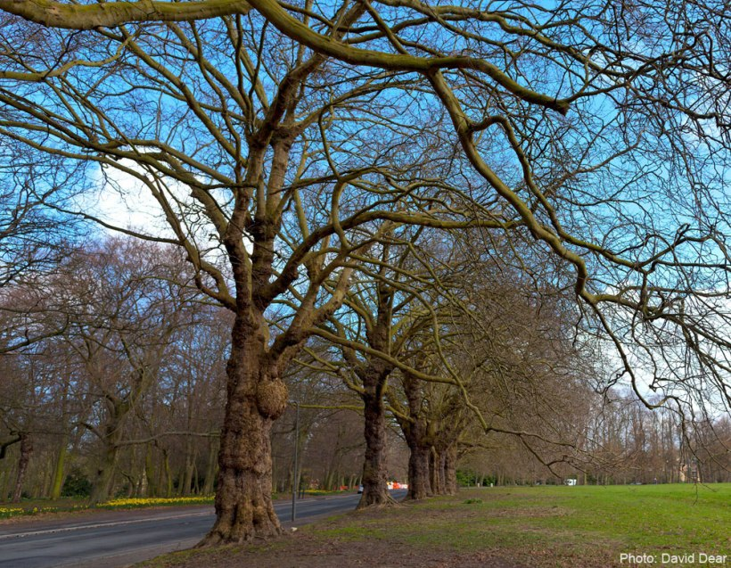 Spring-time at SEFTON PARK MEADOWS