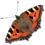 New Save Sefton Park Meadows butterfly logo